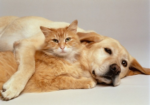 Dogs and Cats - common Problems,pets, Cat, pet, dog,.jpg