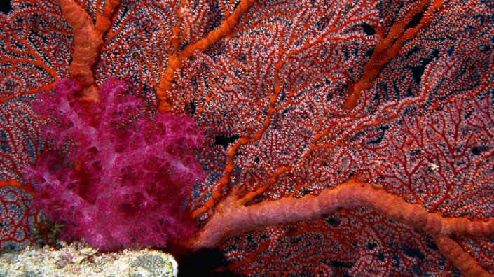 ws_Corals_1920x1080.jpg